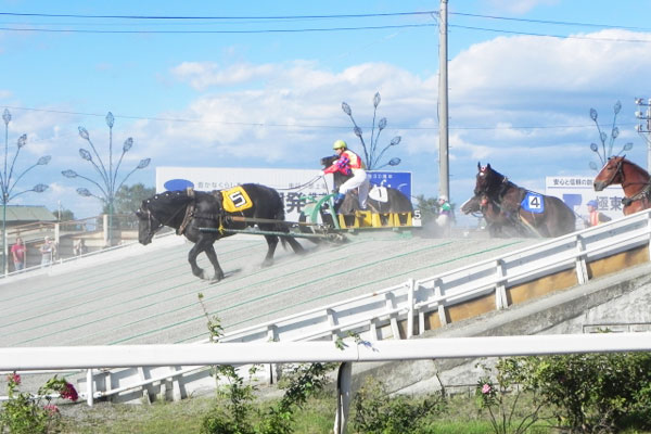 世界で唯一の「ばんえい競馬」