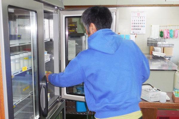 冷蔵庫にて生乳の保管