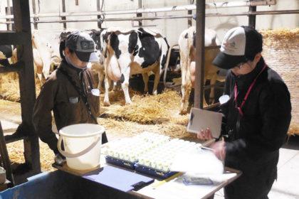 乳牛検定員