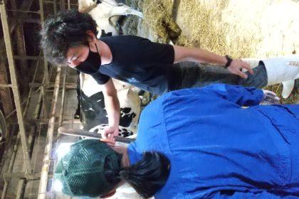 【酪農ヘルパー事業】酪農ヘルパー体験を行いました!